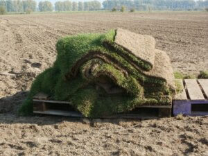 Sod Farms business