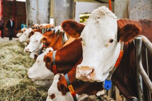 dairy  farming business plans