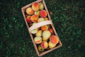 pick peaches