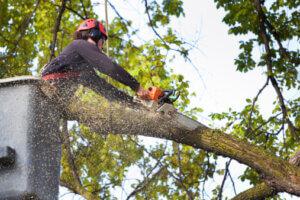 tree cutter, tree cutters, tree cutter service, tree branch cutter, branch trimmer, tree cutter company, small tree cutter,