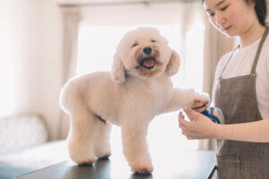 pet grooming at home, dog groomer business plan, groomer for pets, grooming for pets