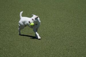Indoor dog park business plan las vegas