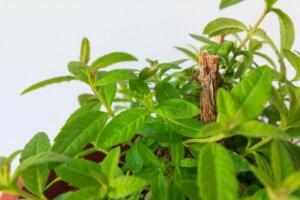 herbal business ideas
