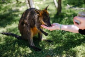 animal sanctuary business plan