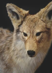 Wise Business Plans Assists Taxidermists across the U.S To Improve Profits