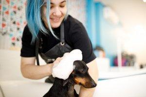 dog training entrepreneurs